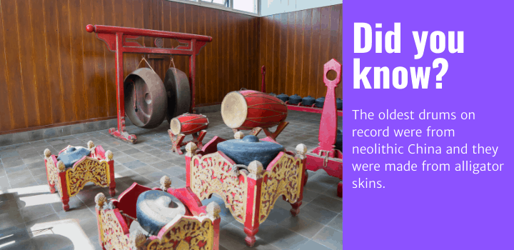 Did you know: The oldest drums on record were from neolithic China and they were made from alligator skins.